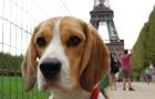 Frankreich_2011_0072