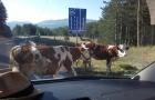 Kroatien_2013_0185
